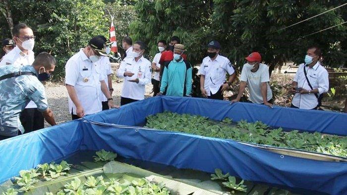 Pasokan Ikan Haruan untuk Lokal Masih Kurang, Pemprov Kalsel Kembangkan Kampung Haruan