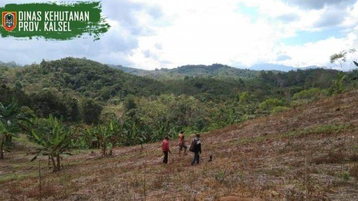 Sengon Seluas Empat Hektare di Loksado HSS Rusak Diserang Hama, Petugas KPH Hulu Sungai Cek Lapangan