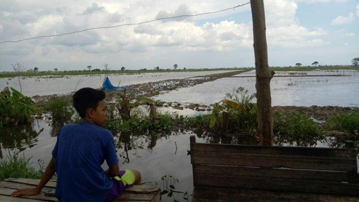 Tergerus Perumahan, Banjarmasin Upayakan Penambahan Lahan Pertanian