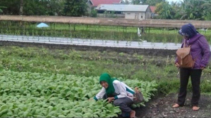 KalselPedia : Landasan Ulin Utara Sentra Sayur di Banjarbaru
