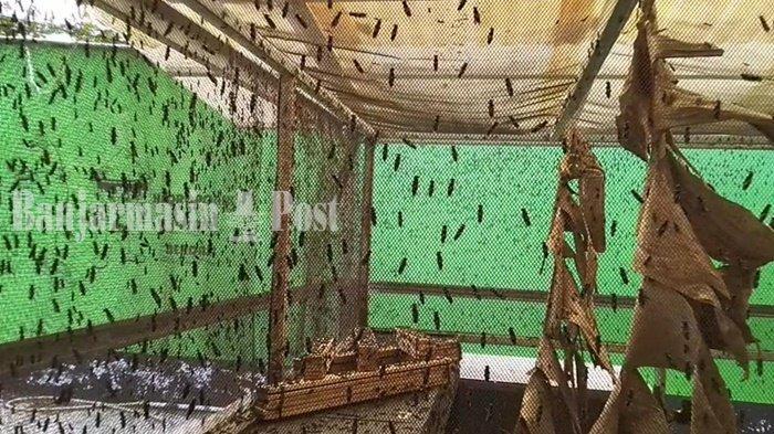 Wisata Kalsel, Training Center Larva Black Soldier Fly Dikunjungi Warga Luar Tabalong