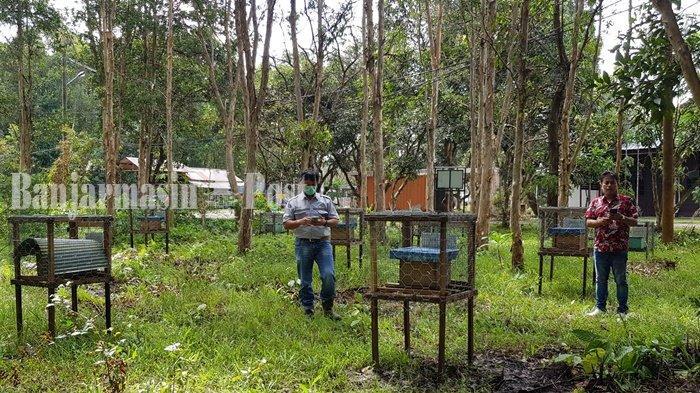 Inilah area pembudidayaan lebah madu di lingkungan kantor perusahaan tambang di Desa Swarangan, Jorong. Ada dua jenis yang dipelihara yaitu lebah hutan dan lebah kalulut.