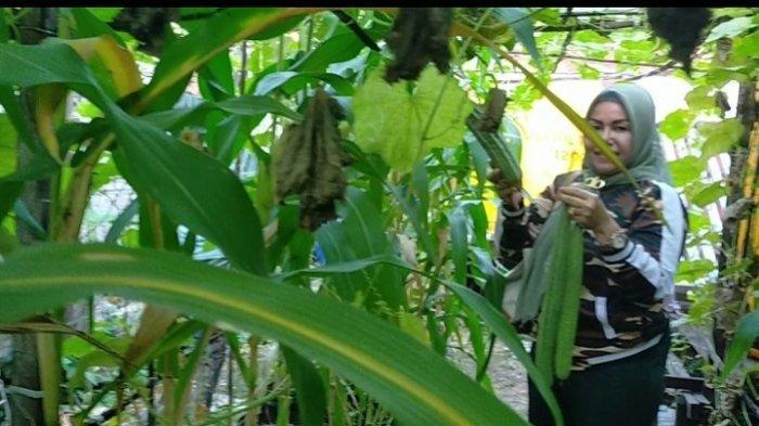 Wisata Kalsel : Wanita Banjarmasin Ini Sulap Eks Jemuran Laundry Jadi Kebun Agrowisata