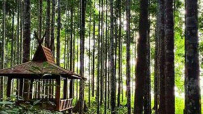 Wisata Kalsel Hutan Meranti Kotabaru Bernuansa Alam Pegunungan, Tertata Dikelola Pemkab Kotabaru - lingkungan-wisata-hutan-meranti-kotabaru.jpg