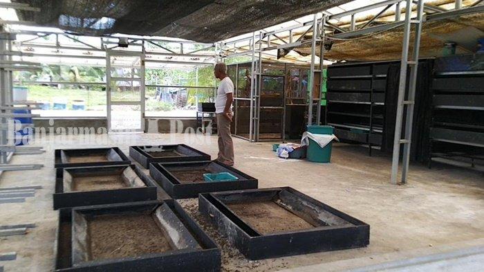Wisata Kalsel, Tempat di Tabalong Ini Lahirkan Kelompok Anak Muda Pembudi Daya Maggot