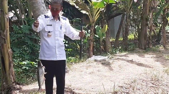 Siapkan Panamas Jadi Kelurahan Percontohan Budidaya Kolam Patin di Kapuas, Begini Upaya Lurah