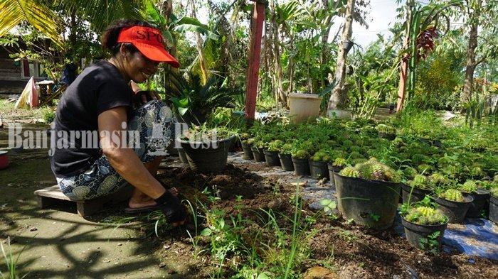 Wisata Kalsel, Taman Kaktus Marni di Wanaraya Batola Dikunjungi Pencinta Tanaman Hias