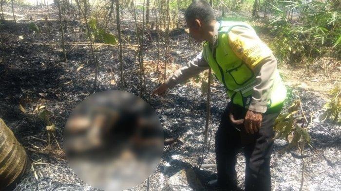 Bakar Daun Bambu,  Mbah Tijah Malah Ditemukan Hangus Terbakar di Pekarangan Anak
