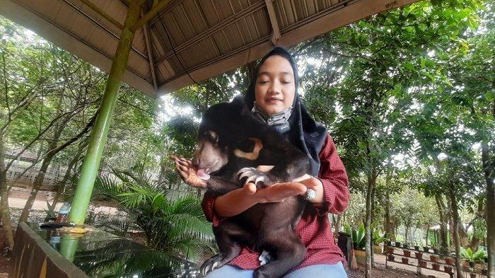 WEEKLY ANIMAL - Yuk Kenalan dengan Mila Beruang Madu di Tahura Mandiangin, Begini Cara Merawatnya