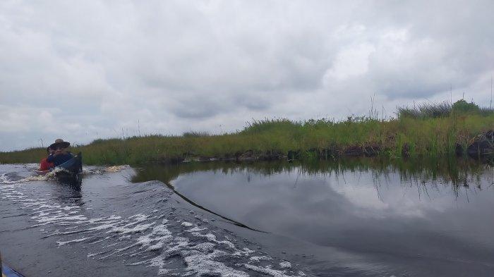 Wisata Kalsel, Kepak Sayap Burung Liar yang Beterbangan Menambah Seru Susur Rawa Swargaloka HSU