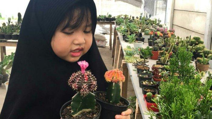 Penjualan Kaktus dan Sukulen Gencar Tembus Omzet Puluhan Juta Rupiah