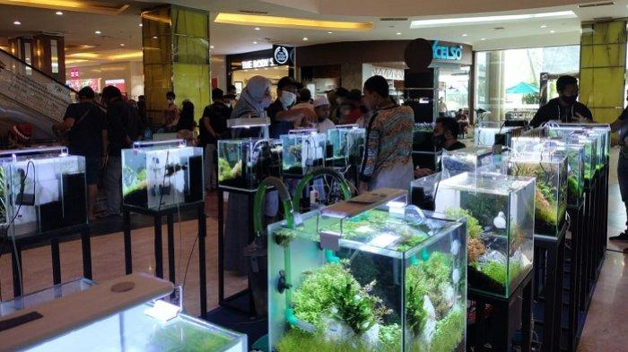 Pencinta Ikan Hias Meningkat di Masa Pandemi, Usaha Aquascape di Banjarbaru Makin Ramai