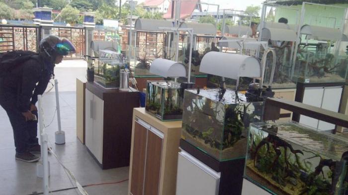 Meraih Jutaan Rupiah dari Bisnis Aquascape, Oky Cari Hiasan Akuarium Sampai ke Kalteng
