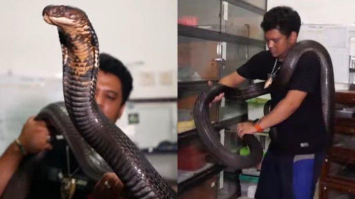 Panji Petualang dan King Kobra Garaga
