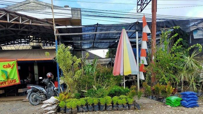 Tetap Jadi Primadona, Bisnis Tanaman Hias Datangkan Penghasilan hingga Jutaan Rupiah