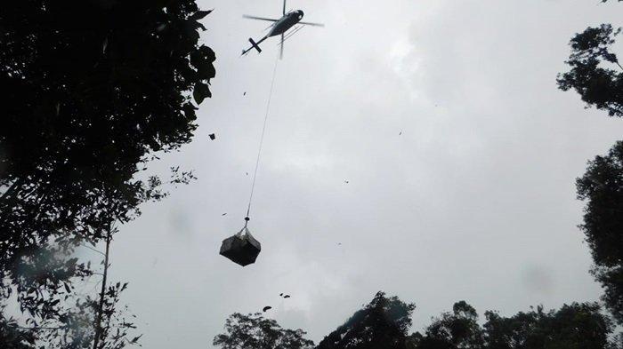 Yayasan BOSF Lepasliarkan 7 Orangutan Pakai Helikopter di Hutan Lindung Bukit Batikap Kalteng