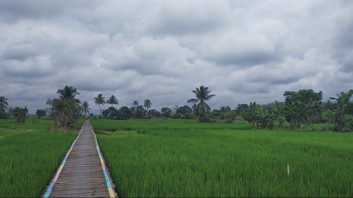 Wisata Kalsel, Susur Rawa Swargaloka HSU Pengunjung Dimanjakan Lukisan Alam Perdesaan