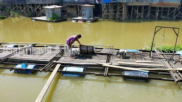 Warga Kabupaten HSU Manfaatkan Aliran Air Sungai untuk Pelihara Ikan