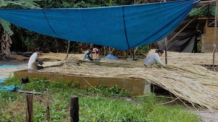 Menilik Bisnis Rotan Kalteng, Pembeli Makin Banyak Petani Kekurangan Stok