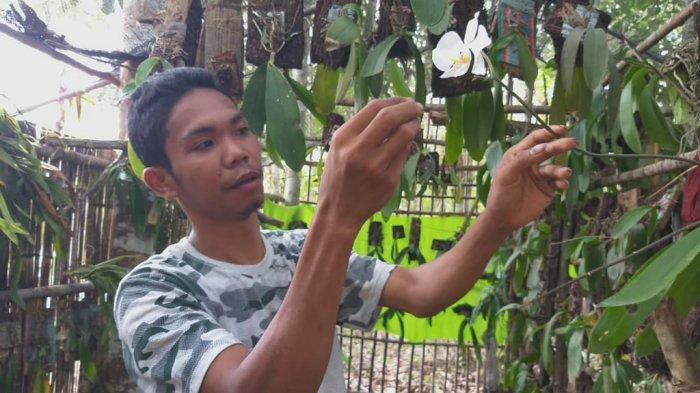 Mulai Sulit Dapatkan Anggrek Bulan Hamzalah Telusuri Hutan Untuk Isi Penangkaran Anggrek Banjarmasin Post