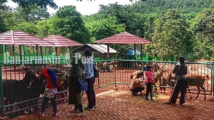 Beri Makan Rusa Cuma Rp 3.000 di Tahura Sultan Adam Mandiangin Kabupaten Banjar