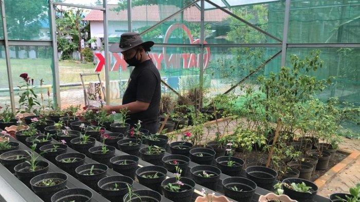 Berikut Cara Mudah Budidaya Edible Flower Jenis Bunga yang Dapat Dikonsumsi