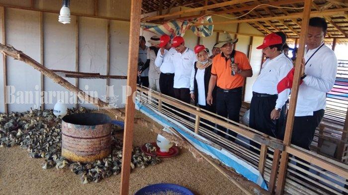 Ribuan Petani Ikuti Panen Perdana Bersama di Lokasi Demfarm Serasi Jejangkit Batola, Ini Hasilnya