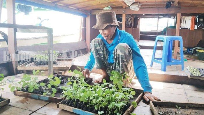 Terdampak Banjir, Penjualan Bibit Sayur di Pasar Baru Marabahan Turun 50 Persen
