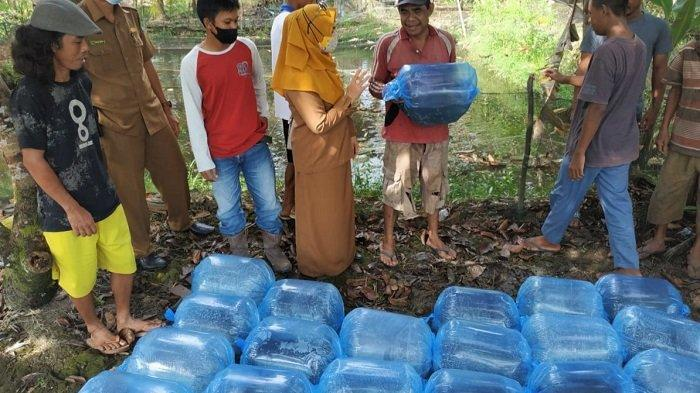 Bersumber dari Dana PokirDewan Dapil Basarang, Pokdakan di Kapuas Terima Bantuan 36 Ribu Benih Ikan