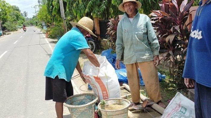 Sawah Tertutup Lumpur, Komisi II DPRD HST Sarankan Petani Beralih ke Hortikultura