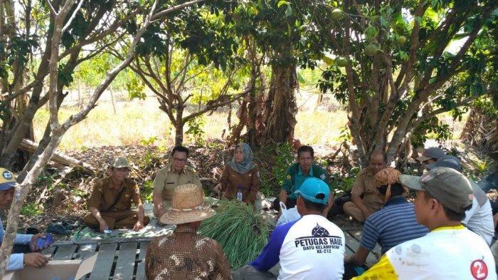 Petani Jeruk Kabupaten Banjar Waswas, Organisme Pengganggu Tumbuhan Mulai Mengancam
