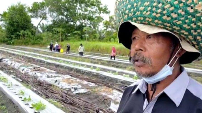 Petani Buah-buahan Kotim Siapkan Panen Blewah Untuk Bulan Ramadan