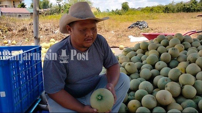 Petani di Cempaka Banjarbaru Kalsel Bersyukur Harga Melon Tak Anjlok