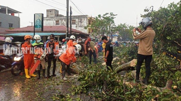 Pohon Tumbang di Jalan Pramuka Banjarmasin Akibatkan Kemacetan Lalu Lintas