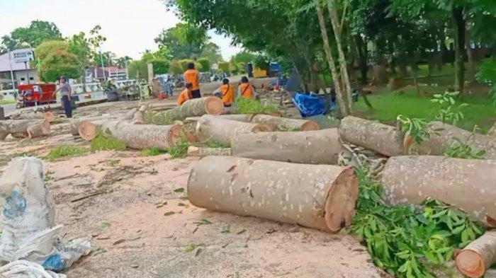 Cegah Kejadian Tumbang Terulang, DLH Kapuas Tebangi Pohon Hutan Kota