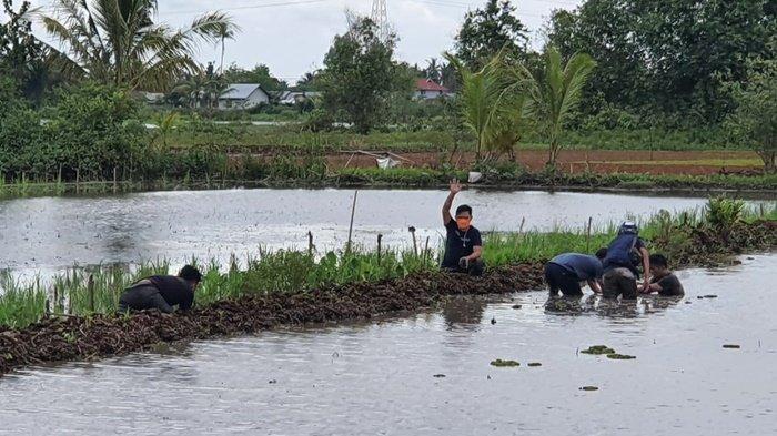 Narkoba Kalsel, Petugas Bekuk 2 Tersangka Pemilik Sabu di Tengah Sawah Tatah Layap