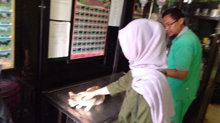 Klinik Hewan Disnakbun Banjar Tak Pernah Sepi, Tiap Hari Segini yang Ditangani
