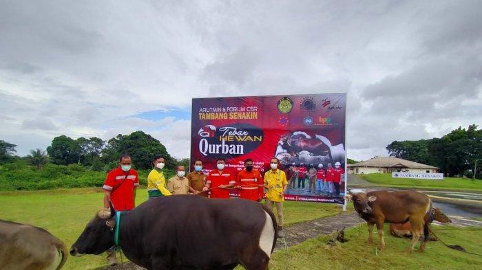 PT Arutmin Indonesia (Arutmin) bersama dengan mitra kerja berkurban sebanyak 129 ekor hewan kurban dengan rincian 88 sapi dan 41 kambing.