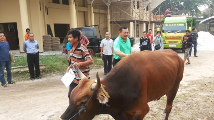 Penyembelihan sapi untuk hewan kurban pemberian Kapolda Kalteng.