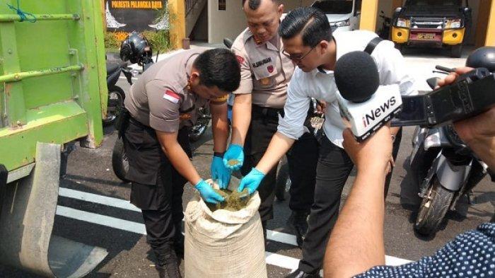 Dua Truk Berisi Ratusan Karung Daun Kratom Bakal Lolos, BNN Kalteng Sebut Belum Ada Dasar Hukumnya
