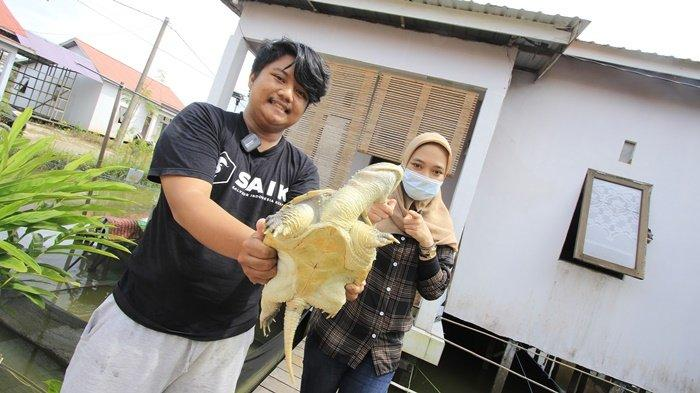 WEEKLY ANIMAL - Kura-kura Purba Jenis RES dan CST, Common Snapping Turtle Lebih Agresif