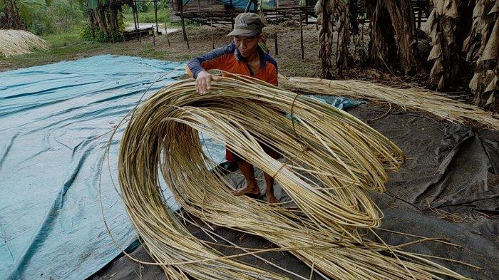 Menilik Bisnis Rotan Kalteng, Rotan Kini Bukan Lagi Hasil Hutan Ikutan, Tapi Budidaya Warga