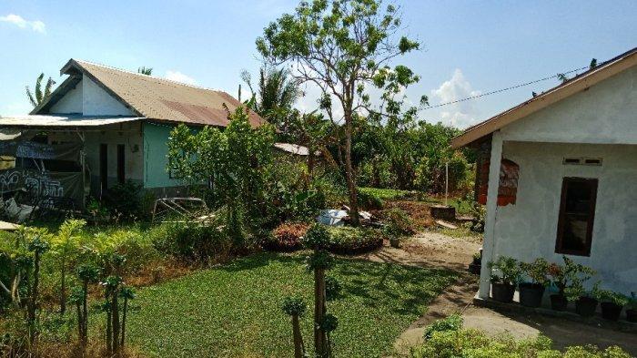 Wisata Kalsel, Landasan Ulin Utara Sentra Rumput Gajah Mini di Banjarbaru