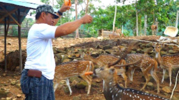 Wisata Kalsel Hutan Meranti Kotabaru Bernuansa Alam Pegunungan, Tertata Dikelola Pemkab Kotabaru - rusa-di-area-wisata-hutan-meranti-kotabaru.jpg