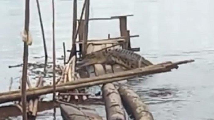 Buaya Sungai Mentaya Kotim Makin Meresahkan, Muncul Mendekati Permukiman Kota Sampit