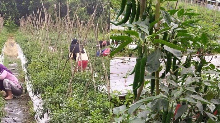 Tujuh Kelompok Tani di Tapin Akan Terima Aliran Dana Alokasi Khusus, Segini Besaran Dananya