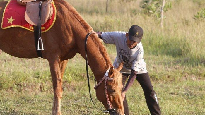 Wisata Kalsel, Jabal Diamond Horse Riding Juga Terima Jasa Penitipan Kuda