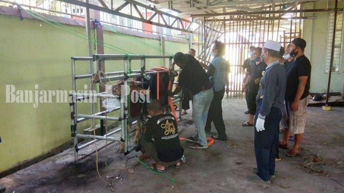 Sapi kurban Idul Adha 1442 H di Masjid Jami, Jalan Masjid Jami, Kelurahan Antasan Kecil Timur, Kota Banjarmasin, Provinsi Kalimantan Selatan, Selasa (20/7/2021) siang.