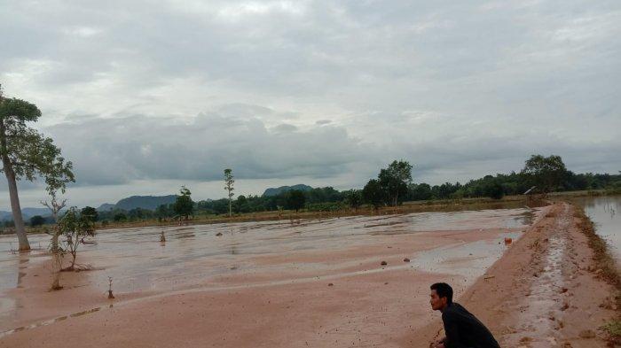 Sawah Petani di Benawa Tertutup Lumpur, Pemkab HST Tolak Alat Berat Pemprov Kalsel