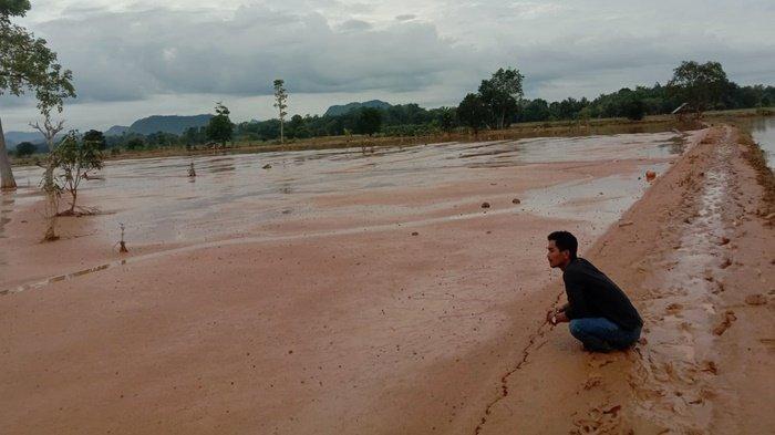 Produksi Padi Terus Menurun, Walhi Ingatkan Pemprov Kalsel Pertegas Wilayah Kelola Rakyat